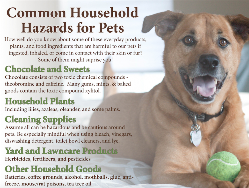 Pet Health Hazards