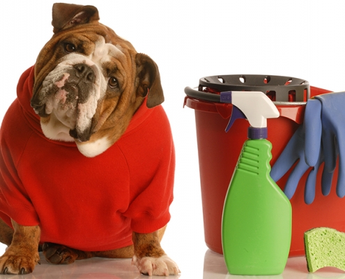 Cleaning Health Hazards for Pets